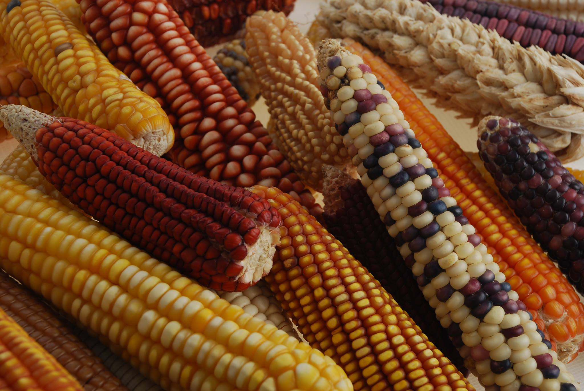 Genetically modified food controversies